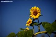 m3_112281_soblu_fb.jpg