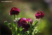 m3_114874_blume_fb.jpg