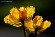 m3_118892_mohn_fb.jpg