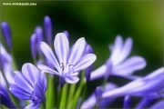 m3_119484_blau_fb.jpg