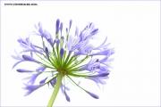 m3_119486_blau_fb.jpg