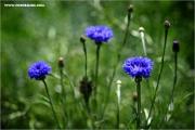 m3_119632_blau_fb.jpg