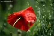 m3_119636_mohn_fb.jpg