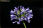 m3_119790_blau_fb.jpg