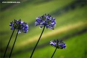 m3_119793_blau_fb.jpg