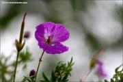 m3_121159_regen_fb.jpg