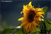 m3_123270_soblu_fb.jpg