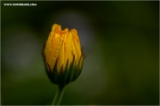 m3_124213_bluete_fb.jpg