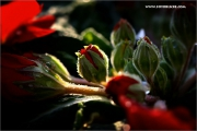 m3_128740_primel_fb.jpg