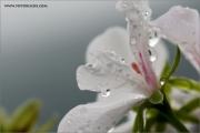 m3_130076_regen_fb.jpg