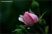 m3_131123_regen_fb.jpg