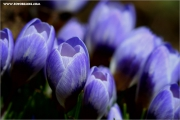 m3_133024_krokuss_fb.jpg