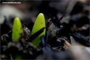 m3_136775_tulpe_fb.jpg