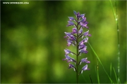 m3_138099_orchidee_fb.jpg