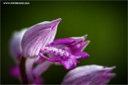 m3_138353_orchidee_fb.jpg