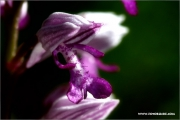 m3_138373_orchidee_fb.jpg