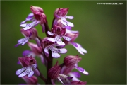 m3_138522_orchidee_fb.jpg