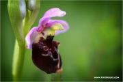 m3_138547_orchidee_fb.jpg
