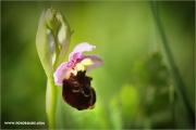 m3_138554_orchidee_fb.jpg