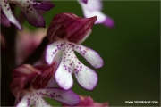 m3_138562_orchidee_fb.jpg