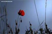 m3_138649_mohn_fb.jpg