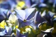 m3_144449_hortensie_fb.jpg