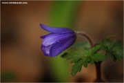 m3_812356_anemone_fb.jpg
