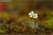 m3_813185_klein_fb.jpg