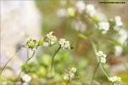 m3_813190_klein_fb.jpg