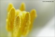 m3_814016_tulpe_fb.jpg