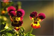 m3_819915_stiefm_fb.jpg