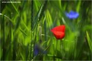 m3_821256_weizenfeld_fb.jpg