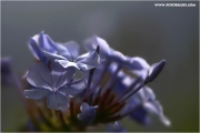m3_824883_geranie_fb.jpg