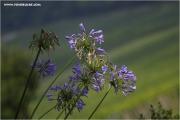 m3_827203_blau_fb.jpg