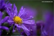 m3_830021_blume_fb.jpg