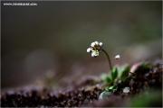 m3_916151_bluete_fb.jpg