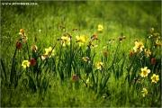 m3_9200827_tulpen_fb.jpg