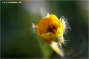 m3_923151_gelb_fb.jpg