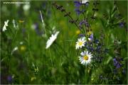 m3_924305_wiese_fb.jpg