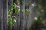 m3_939521_zaun_fb.jpg