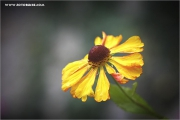 m3_939543_blume_fb.jpg