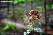 m3_939601_garten_fb.jpg
