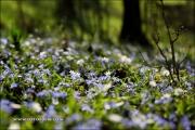 Blühender Waldboden