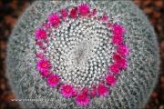 m5_177908_kaktus_fb