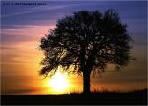 c20_618658_baum_fb.jpg