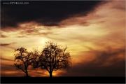 c21_620117_baeume_fb.jpg