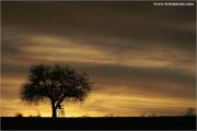 c21_625503_baum_fb.jpg