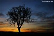 c21_810539_su_fb.jpg