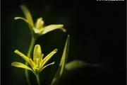 c20_638050_bluete_fb.jpg
