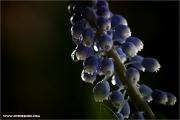 d100_152561_hya_fb.jpg